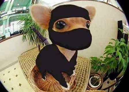 ninja_dog2